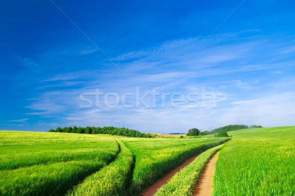 Estate panorama verde campo alberi cielo blu Foto d'archivio © photocreo