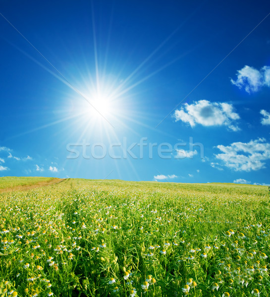 Spring field with flowers and blue sky Stock photo © photocreo