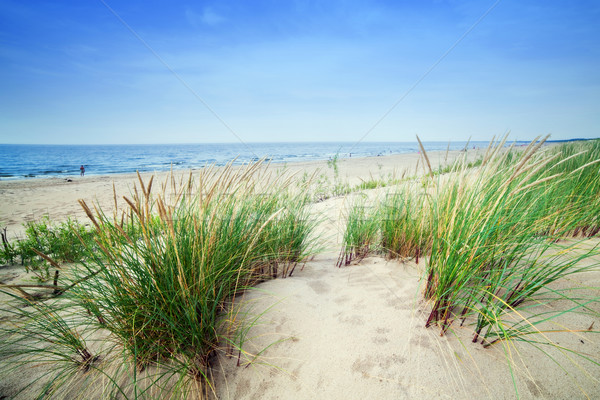 Calm beach with dunes and green grass. Tranquil ocean Stock photo © photocreo