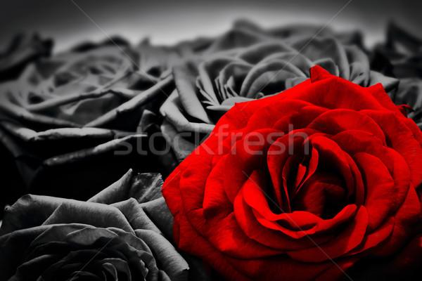 Romantikus üdvözlőlap piros rózsa feketefehér rózsák valentin nap Stock fotó © photocreo
