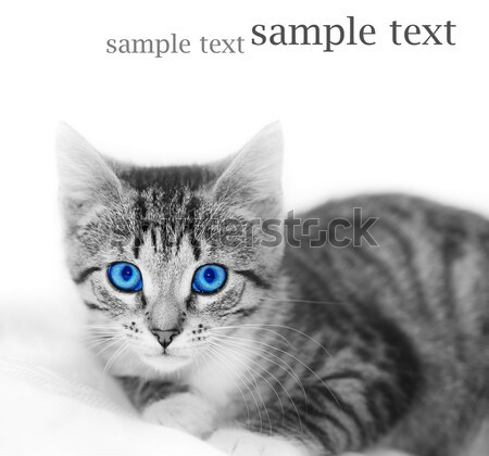 LIttle cute kitten. Space for your text Stock photo © photocreo
