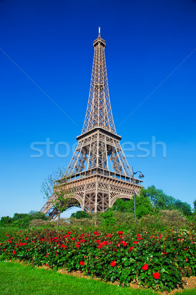 Eiffel Tower, red roses in Paris, France Stock photo © photocreo