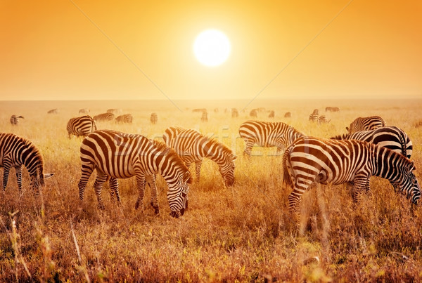 африканских саванна закат Африка Сток-фото © photocreo