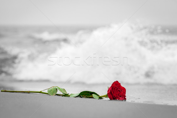 Waves washing away a red rose from the beach. Color against black and white. Love Stock photo © photocreo