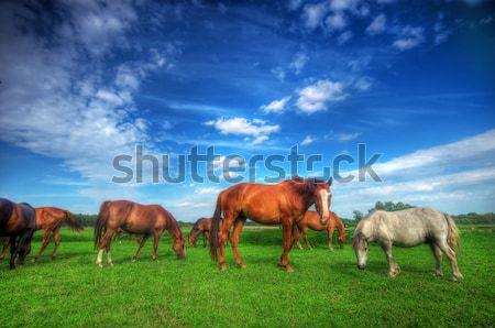 Sauvage chevaux domaine belle parfait forêt Photo stock © photocreo