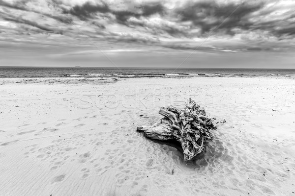 Tree trunk on the beach. Cloudy, stormy day. Black and white Stock photo © photocreo