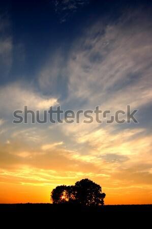 Zdjęcia stock: Wygaśnięcia · drzew · przestrzeni · drzewo · pomarańczowy · zielone