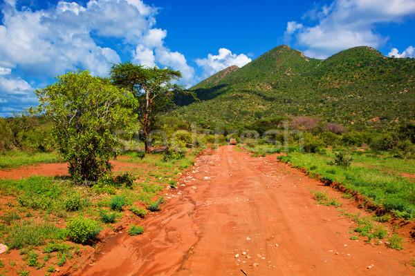 Piros föld út bokor szavanna nyugat Stock fotó © photocreo