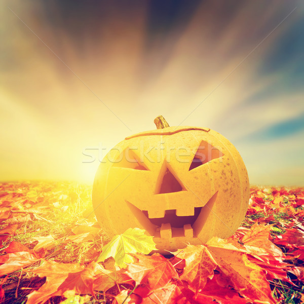 Halloween pumpkin in fall, autumn leaves Stock photo © photocreo
