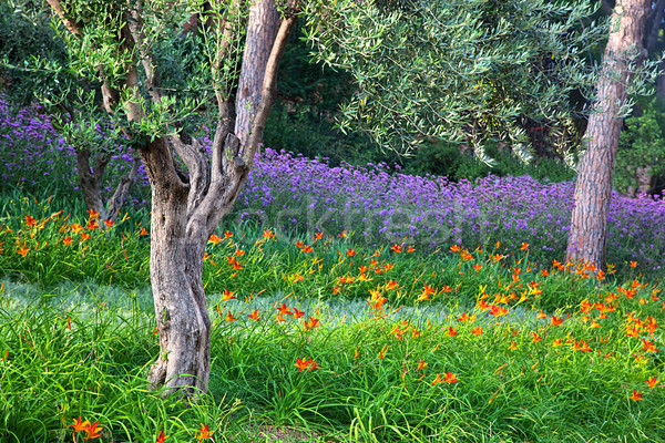 Colorful park with flowers Stock photo © photocreo