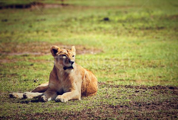 ストックフォト: 女性 · ライオン · タンザニア · サバンナ · クレーター · アフリカ