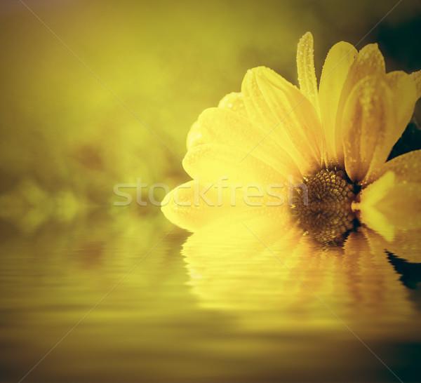 Vers lentebloem water zon licht spa Stockfoto © photocreo