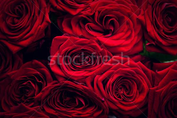 Kırmızı ıslak güller yalıtılmış siyah muhteşem Stok fotoğraf © photocreo