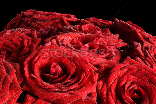Red wet roses flowers isolated on black background. Stock photo © photocreo