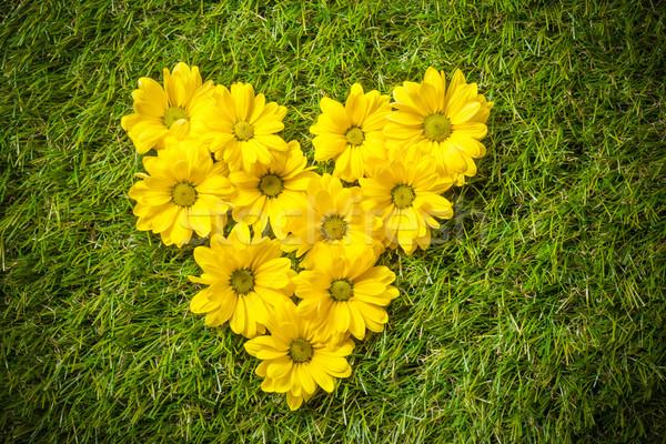 Taze bahar çiçekleri kalp şekli çim doğal sevmek Stok fotoğraf © photocreo