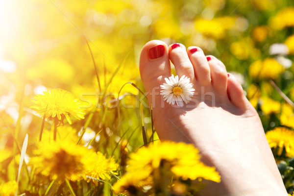 Foot of a young woman with a spring flower in fingers lying on sunny meadow. Stock photo © photocreo
