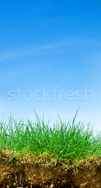 Terreno grama céu seção transversal três elementos Foto stock © photocreo