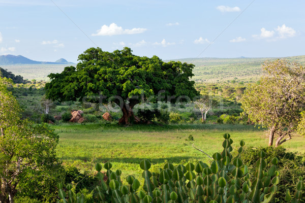 Savanna, bush landscape in Africa. Tsavo West, Kenya. Stock photo © photocreo