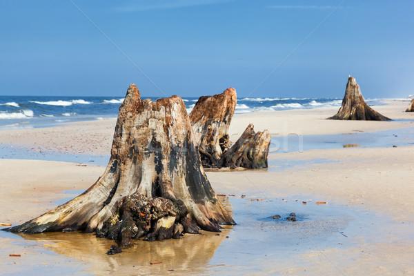 Stockfoto: Jaren · oude · boom · strand · storm