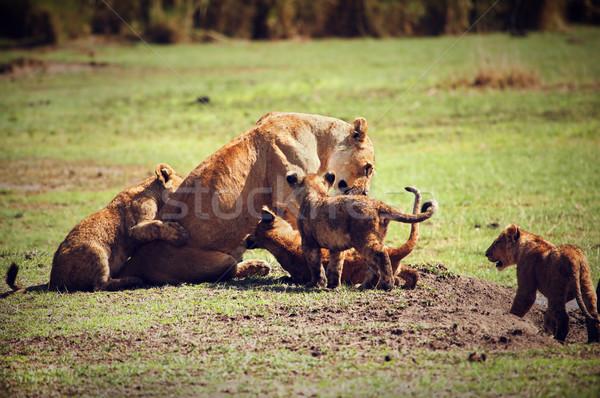 ストックフォト: 小 · ライオン · 母親 · タンザニア · アフリカ · サバンナ