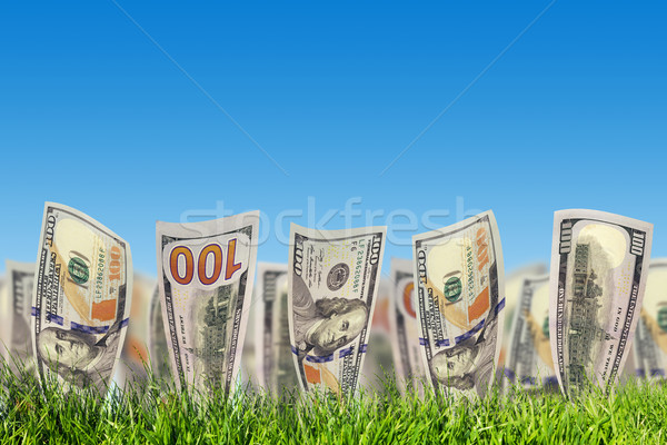 One hundred dollar banknotes growing from green grass. Money Stock photo © photocreo