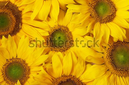 Flowers background Stock photo © photocreo