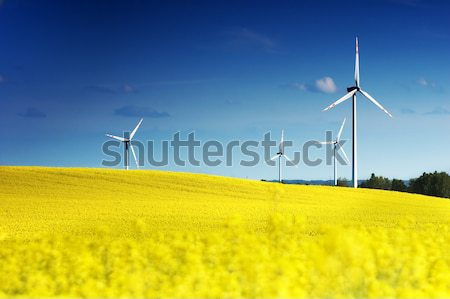Wind turbines farm on the rape field. Ecology, environment Stock photo © photocreo