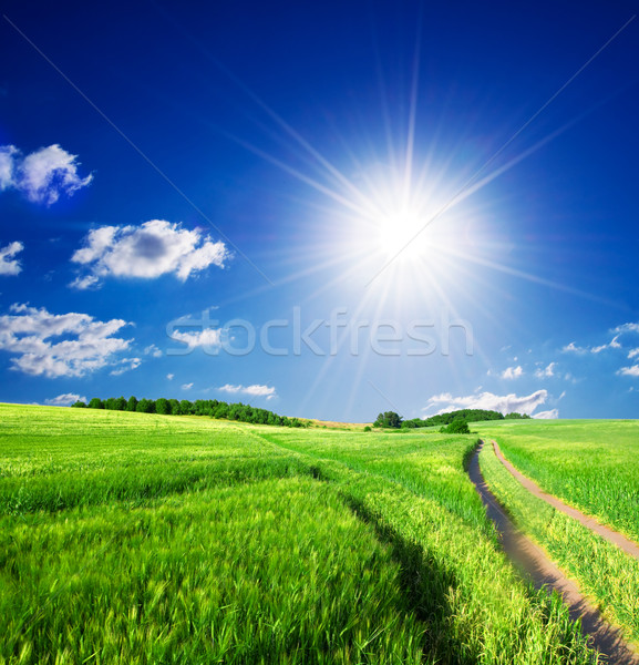 Summer rural landcape Stock photo © photocreo