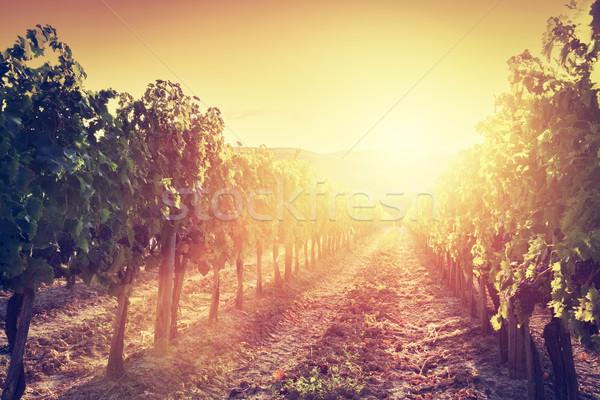 Vineyard landscape in Tuscany, Italy. Wine farm at sunset Stock photo © photocreo
