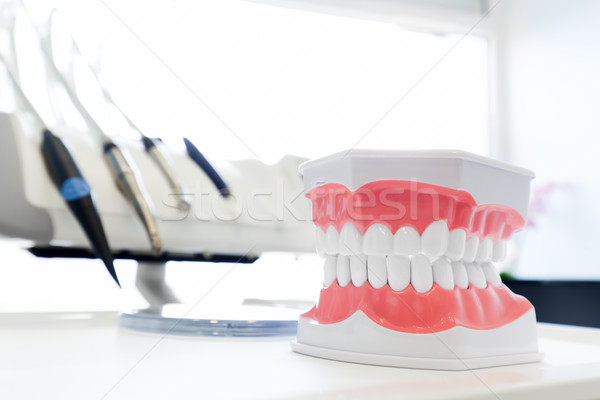 Clean teeth denture, dental jaw model in dentist's office. Stock photo © photocreo