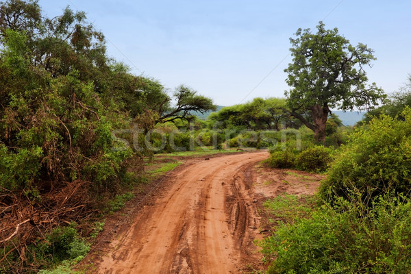 Red ground road, bush with savanna. Tsavo West, Kenya, Africa Stock photo © photocreo