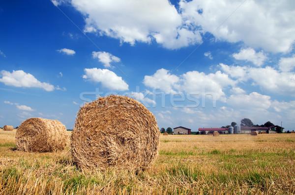 Veld oogst natuur landschap achtergrond zomer Stockfoto © photocreo