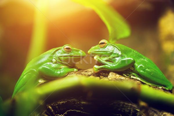 Сток-фото: два · зеленый · сидят · лист · глядя · другой