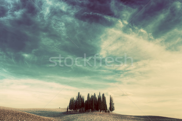 Cypress trees on the field in Tuscany, Italy at sunset. Vintage Stock photo © photocreo