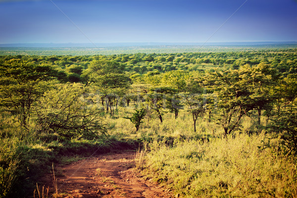 Serengeti savanna landscape in Tanzania, Africa. Stock photo © photocreo