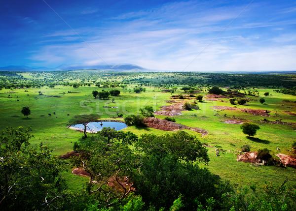 Szavanna virágzik Tanzánia Afrika panoráma Serengeti Stock fotó © photocreo
