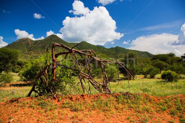 Bush and savanna landscape. Tsavo West, Kenya, Africa Stock photo © photocreo