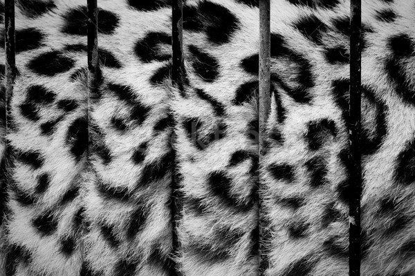 Gros chat cage fourrures derrière zoo bars Photo stock © photocreo