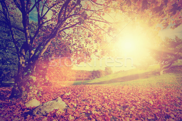 Autumn, fall landscape with a tree. Sun shining through leaves. Vintage Stock photo © photocreo