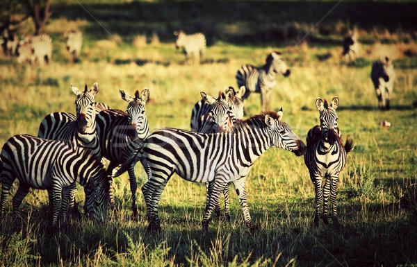 африканских саванна Африка Safari Сток-фото © photocreo