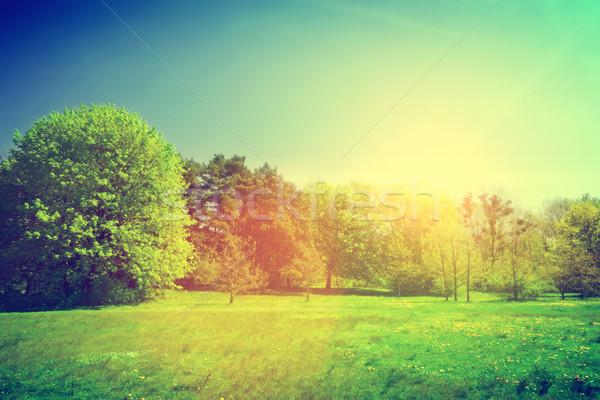 Sunny summer green landscape. Vintage Stock photo © photocreo