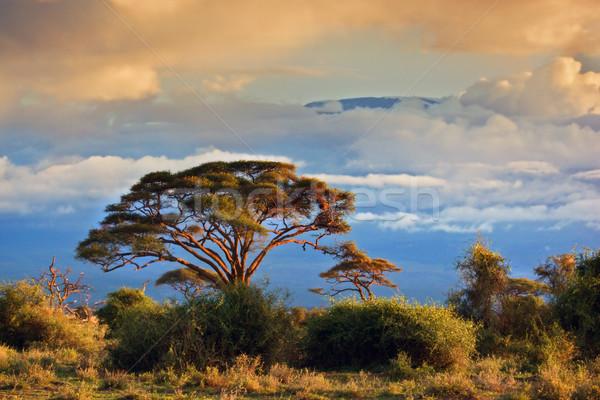 Stock fotó: Kilimandzsáró · szavanna · Kenya · részben · felhők · naplemente