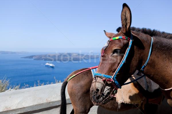 Donkeys in Fira on the Santorini island, Greece. Stock photo © photocreo