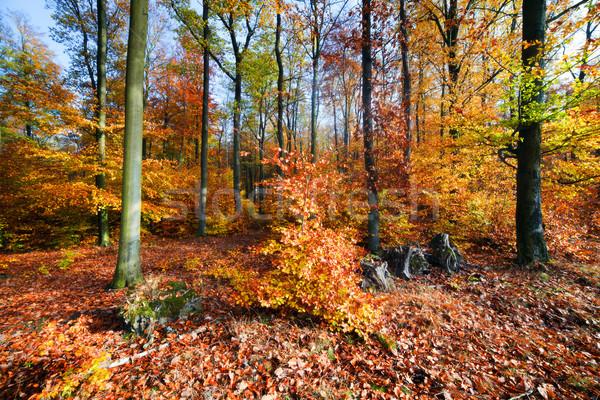 Zdjęcia stock: Naturalnych · lasu · jesienią · spadek · kolorowy