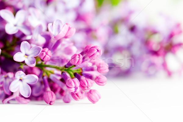 Foto stock: Jóvenes · primavera · lila · flores · blanco