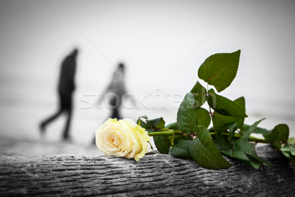 Rose lying on broken tree on the beach. A couple walking in the background. Love Stock photo © photocreo