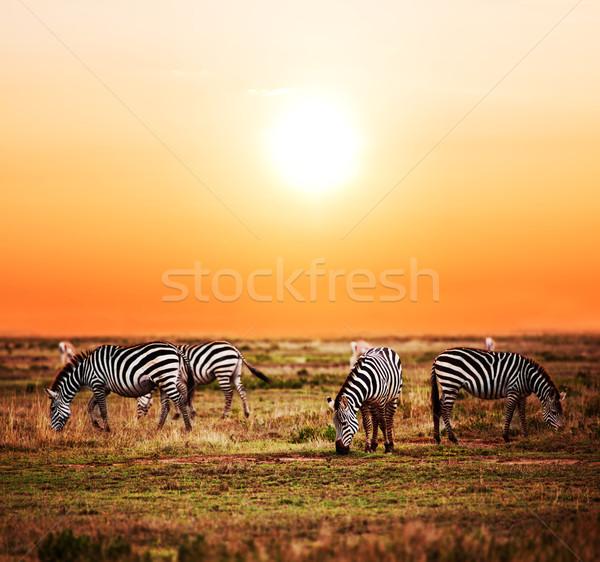 Zebrák nyáj afrikai szavanna naplemente Afrika Stock fotó © photocreo