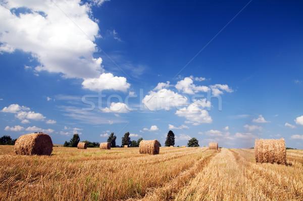 Alan hasat doğa manzara arka plan yaz Stok fotoğraf © photocreo