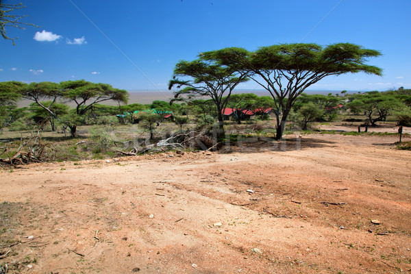 Szavanna tájkép Afrika Serengeti Tanzánia fák Stock fotó © photocreo