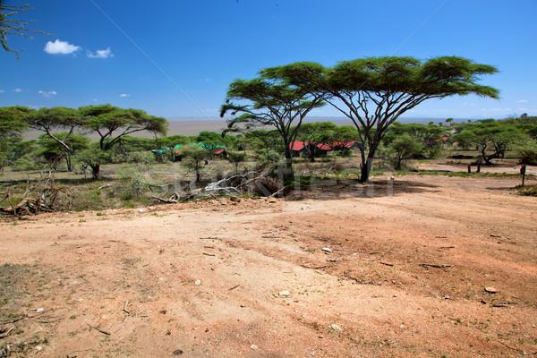 саванна пейзаж Африка Серенгети Танзания деревья Сток-фото © photocreo